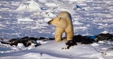 False Alarm over Polar Bears Exposed - Again